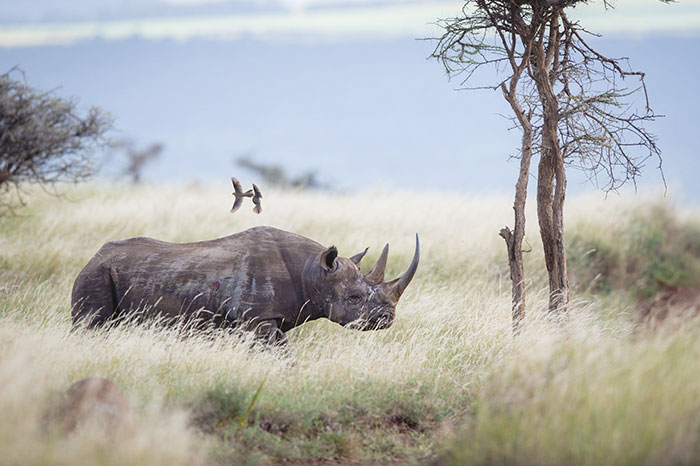 This Park Is Protecting The Rhinos But People Are Being Killed To Do So.
