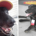 You Won't Believe How This Dog Got A Full Time Job.