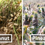 25+ Pictures Of Fruit And Vegetables That Prove That Change Is Necessary.