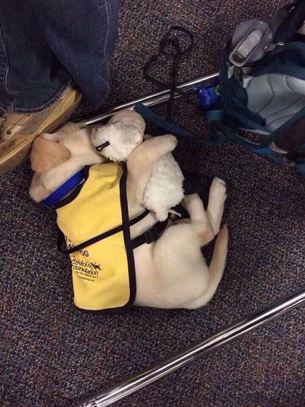 These Pictures of Puppies on Their First Day of Work Will Get You Out of Your Monday Blues!