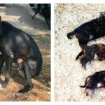 Mad Woman Kills 8 Puppies In Front Of Their Mother Just To Make A Statement And Now Is Facing Some Serious Prison Time