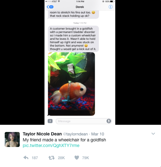 You Tuber Makes Wheel Chair For Gold Fish And Tweeter Is Losing It Yet Again!