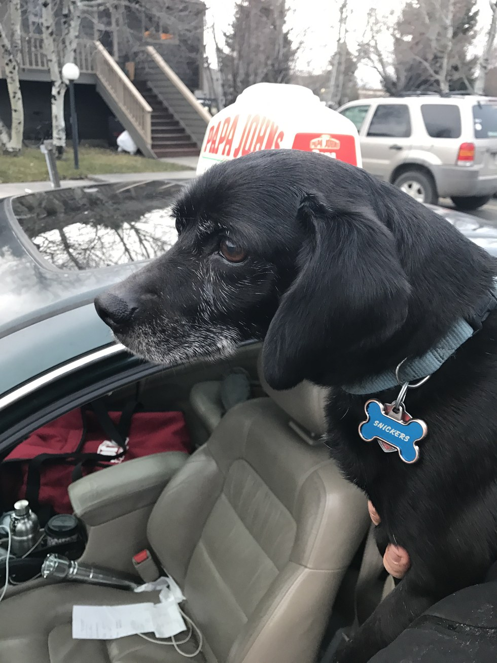 Pizza Delivery Guy Delays Pizza Delivery To Complete A Dog's Rescue
