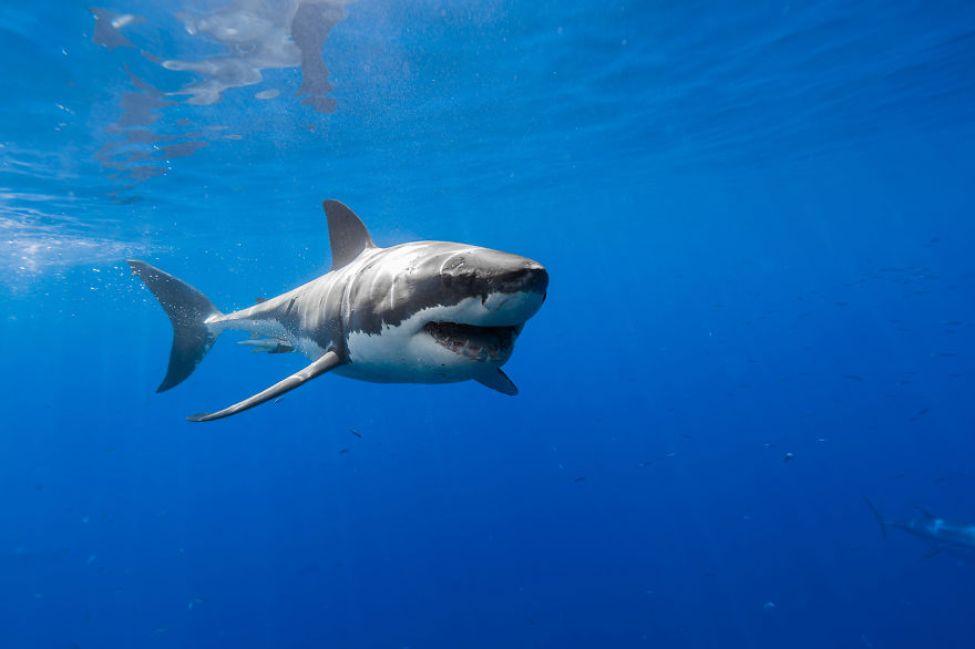 This Shark Experiment Tells Us What Holds Us Back From Achieving Success.