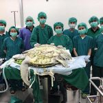 This Turtle Swallowed 915 Coins Over A Period Of 25 Years And Had To Go Through Surgery To Remove Them!