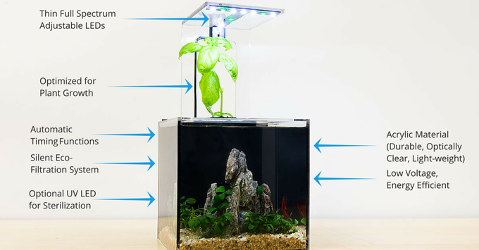 This New Aquarium Doesn't Require Any Changes In Filter Or Water.