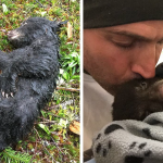 Photographer Saved A Baby Bear. Even Risked His Life For Saving The Little Bear!