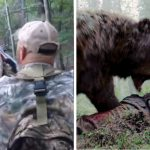 Bear Pretended To Be Dead And Then Attacked The Hunter!