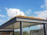 55 Bus Stops Are Getting Green Roofs Covered in Plants as a Gift For Honeybees in NL