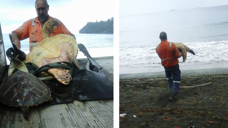 This Man Buys Turtles From The Food Market And Sets Them Free In The Ocean